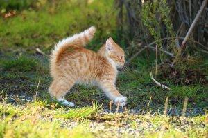 迷い犬・迷い猫にはポスティングが効果的