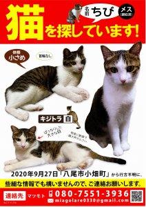 迷い猫のチラシを配布しました!